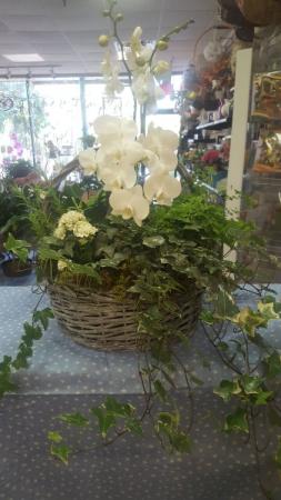 Orchid & Ivy Flowering Basket