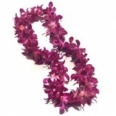 Fuchsia  Orchid Leis 10 days Notice Required