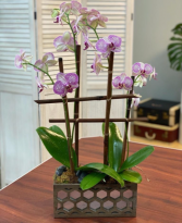 Orchid Lounge
