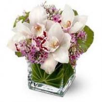 Orchid Love Arrangement