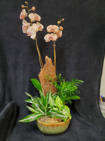 Orchid lushness plant