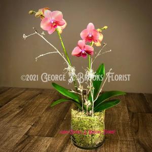 ORCHID LUX  in Brattleboro, VT | George J. Brooks Florist LLC
