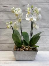 Orchid Memories