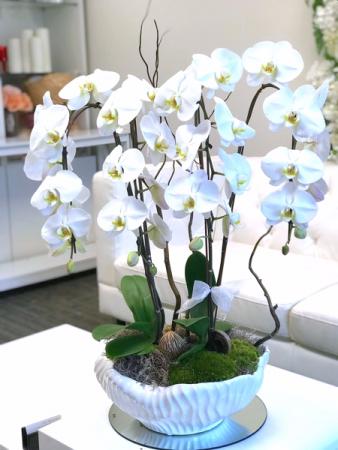 Orchid Oasis floral arrangement
