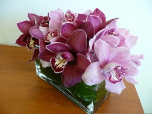 Orchid Odyssey  in Easton, CT | Felicia's Fleurs