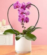 Orchid of my Heart **Available only in white