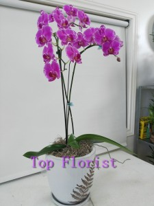 Orchid Orchid in Sharpstown, TX | TOP FLORIST