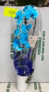 Big Orchid Plan Blue