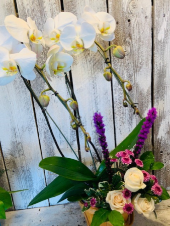 orchid plant/ and floral garden seasonal mix
