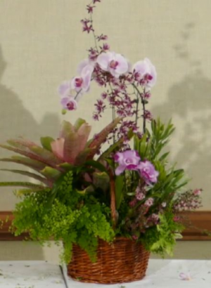 Orchid Plant Basket Any Occassion in Canton, GA | Canton Florist