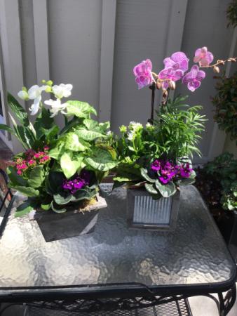Orchid Plant Box