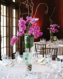 Orchid Plant Centerpiece Wedding Flowers