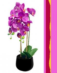 Orchid Plant Color Plant
