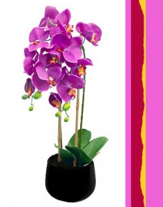 Orchid Plant Color Plant