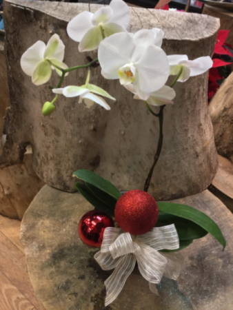 Orchid Plant decorated for the Season