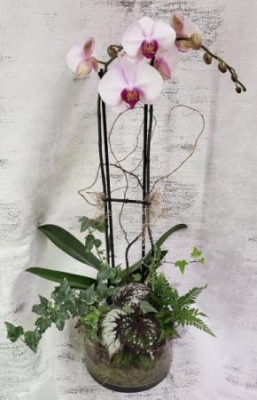 Orchid Plant Dish Garden