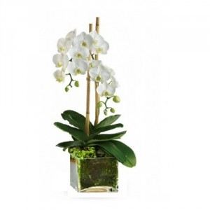 Orchid Plant in a stylish glass container  in Burbank, CA | LA BELLA FLOWER & GIFT SHOP