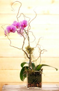 Orchid Plant Plant in Teaneck, NJ | Teaneck Flower Shop (A.A.A.A.A.)