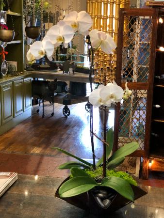 Orchid Plant Plant
