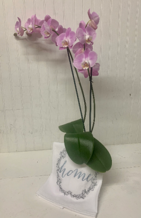 Orchid Plant with Embroidered Flour Sack Towel