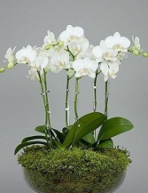 Orchid Planter Any Occassion