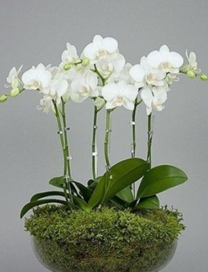 Orchid Planter Any Occassion in Canton, GA | Canton Florist