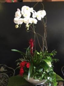Orchid Planter garden