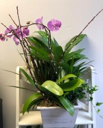 Orchid Planter Houseplants