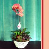 Orchid Planter Plant