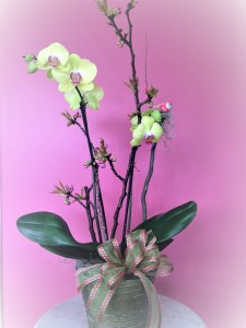 Orchid Plants Blooming Plant