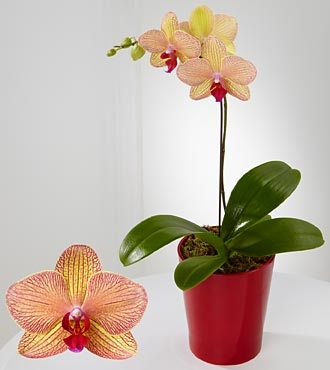 ORCHID PLANTS IN MANY WAYS CALL FOR ASSORTMENT