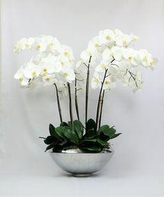orchid plants pick your color plants
