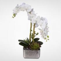 Orchid plants plants