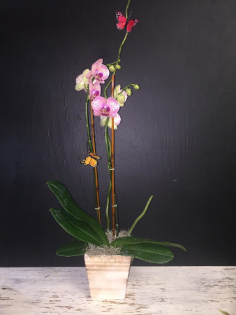 Orchid Potted Plant
