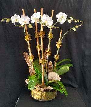 Orchid Elegance Plant in Boca Raton, FL | Flowers of Boca
