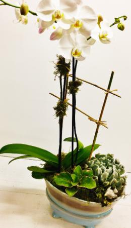 Orchid & Succulent Dish Garden