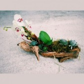 Orchid, Succulent & Draft Wood Blooming Plants