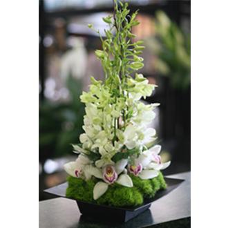 Orchid Tower Arrangement