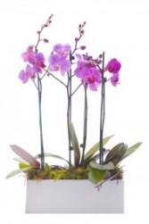 Orchid Trio Container
