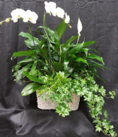 ORCHID TRIPLE BASKET