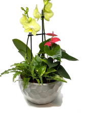 Orchid Tropical Planter