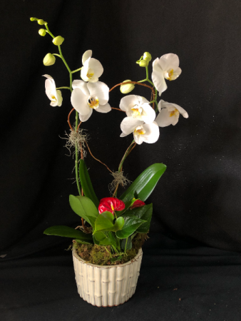 Orchid with Red Anthurium