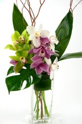 orchidea di cymbidium trio