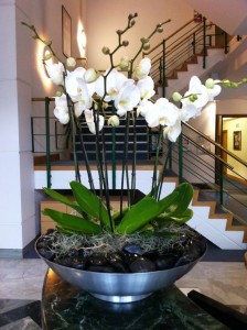 Orchids arranged   in Oakville, ON | ANN'S FLOWER BOUTIQUE-Wedding & Event Florist