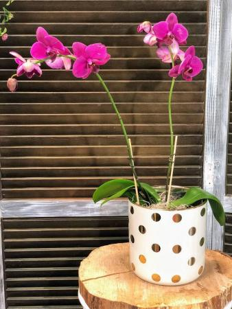 Blooming Purple Orchid