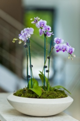 ORCHIDS FOR MOM Plant