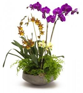 Orchids Garden Blooming Plants in Lauderhill, FL | BLOSSOM STREET FLORIST