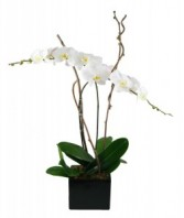 Orchids Planter Blooming Plants