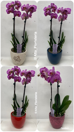 ORCHIDS! PLANTS in Bronx, NY | ALTA FLORISTERIA