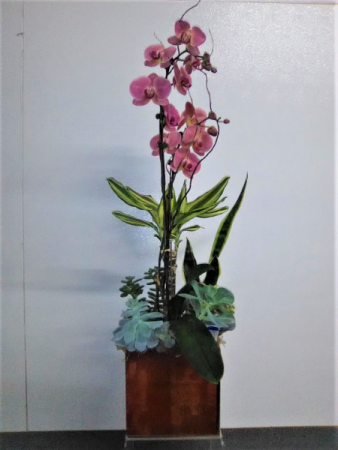 ORCHIDS WITH SUCCULENT PLANTS SAME DAY DELIVERY